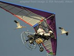File Photo of Vladimir Putin and Pilot in Hang Glider Airborne Next to Flying Cranes