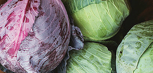 Red Cabbage and Green Cabbages, adapted from image at pnnl.org