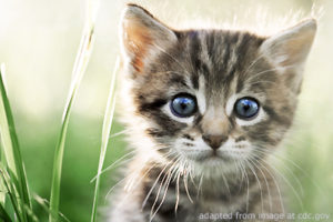 File Photo of Young Cat Amidst Tall Grass, adapted from image at cdc.gov