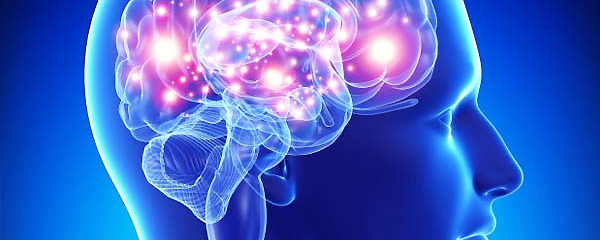 Artist's Rendition of Head and Brain, adapted from .gov image at lbl.gov