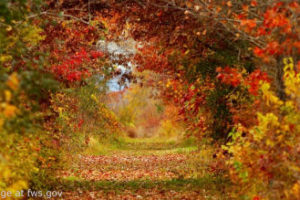 File Photo of Autumn Leaves and Wooded Trail, With Patches of Sunshine or Sky, adapted from image at fws.gov by Steven C. Welsh :: www.stevencwelsh.info :: www.stevencwelsh.com