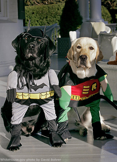 File Photo of Dogs Dressed as Batman and Robin, adapted from photo at whitehouse.gov