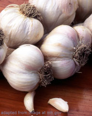 Fresh Garlic Heads and Cloves file photo