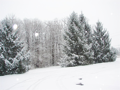 Snowy Scene with Trees and Hills file photo, adapted from NWS image