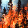 Forest Fire file photo