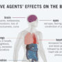 Nerve Agent Effects Body Chart, adapted from image at shareamerica.gov with credit to CDC
